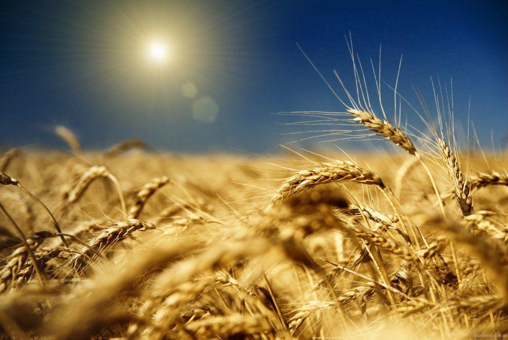 Порядок створення та позитивні риси особистого селянського господарства