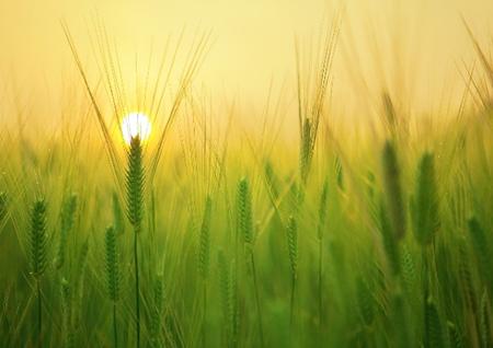 Верховна Рада України відкрила ринок землі